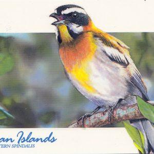 Bird-Cayman Islands